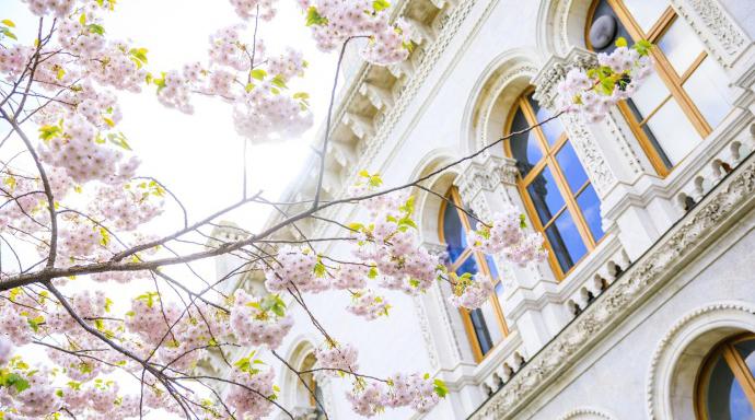 3月25日圣三一商学院特别奖学金面试会!